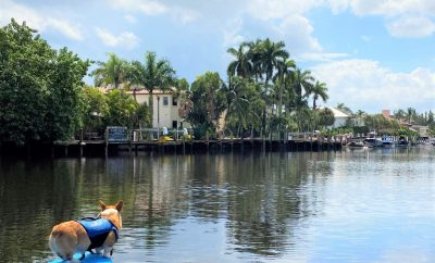 Find out how to Take a Fort Lauderdale Paddleboard Tour with a Corgi